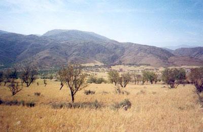 Savana Sadengan - Picture of Sadengan Savannah, Banyuwangi ...